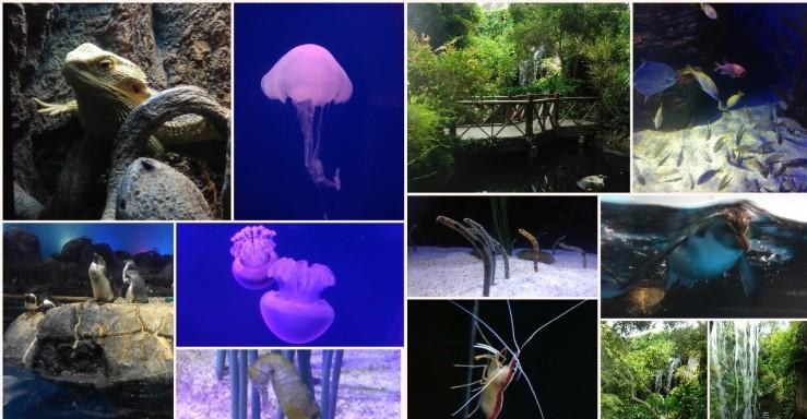 Collage 2019-05-11 13_03_32.jpg